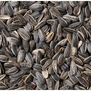 Sunflower Seeds In Shell Roasted
