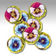 FOILED PANSIES